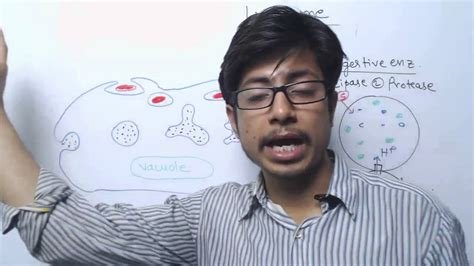 Lysosome Structure And Function - YouTube