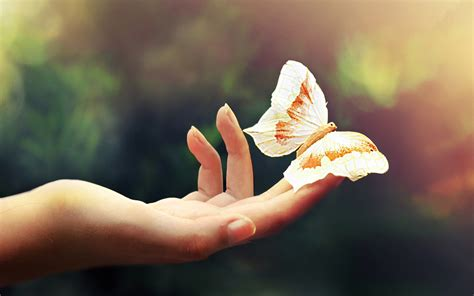 #4590046 #insect, #butterfly, #hands, #closeup, wallpaper