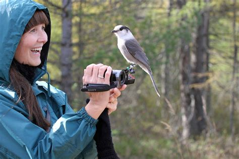 Canada jay gets its fitting name back – RCI   English