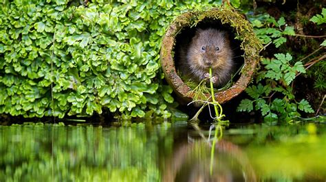 nature, Plants, River, Beavers Wallpapers HD / Desktop and